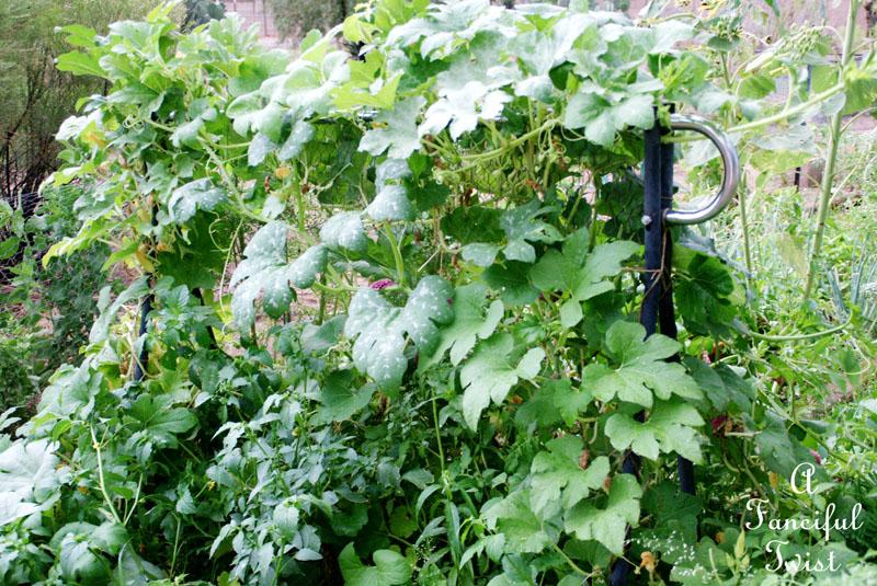 Garden rain 32