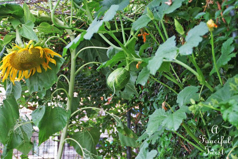Garden rain 31