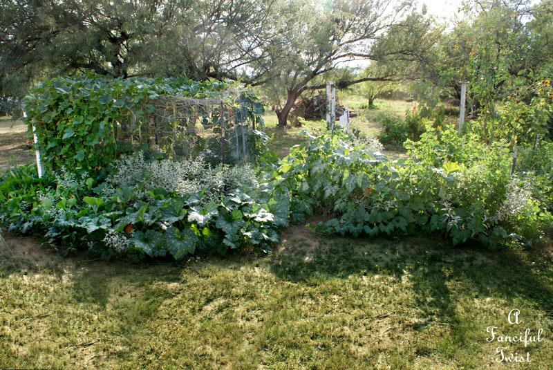 Garden grow 41