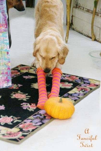 Halloween dog 3