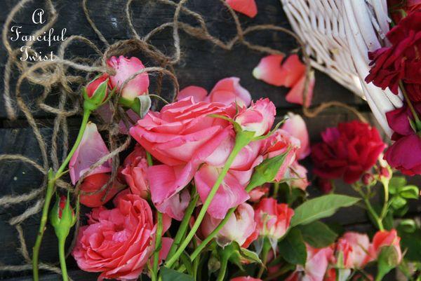 Roses 32