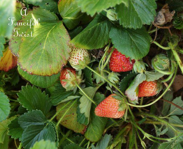 Berries and cream 6