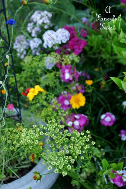 Growing garden 16