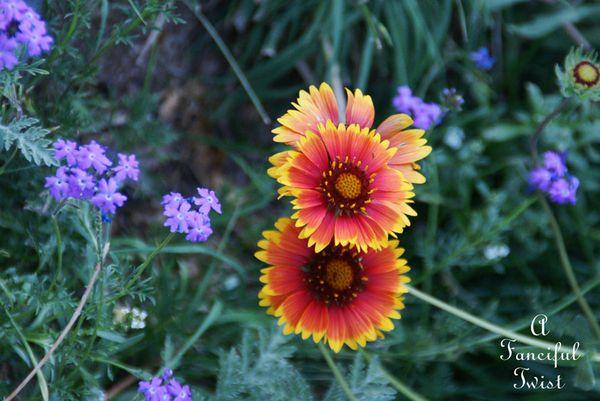 Growing garden 38