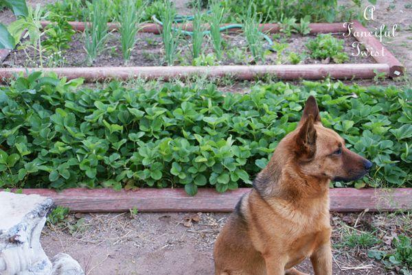 Growing garden 18