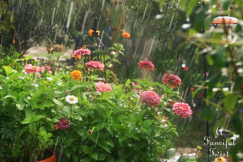Garden rain 22