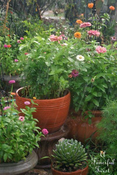 Garden rain 24