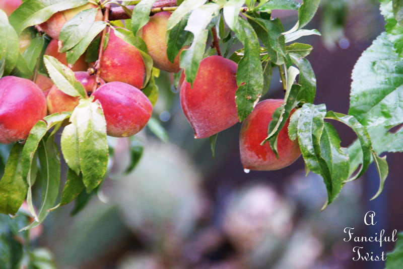 Garden rain 1