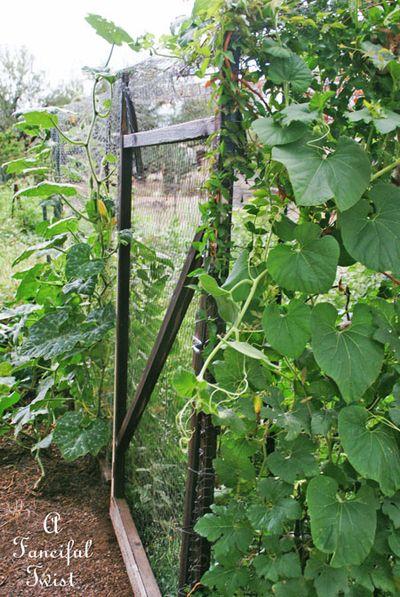 Garden rain 15
