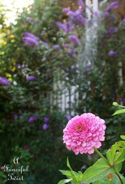 Garden grow 4