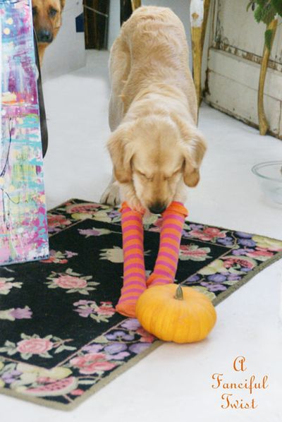 Halloween dog 2