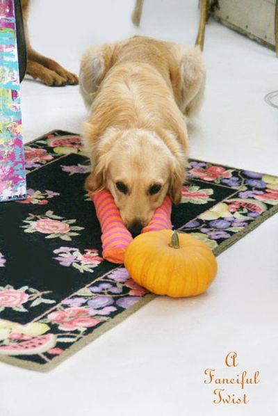 Halloween dog 4