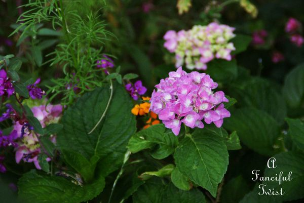 Growing garden 39