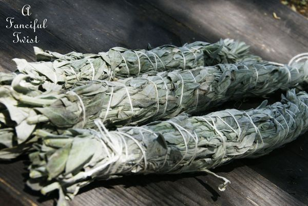 Collecting sage 4