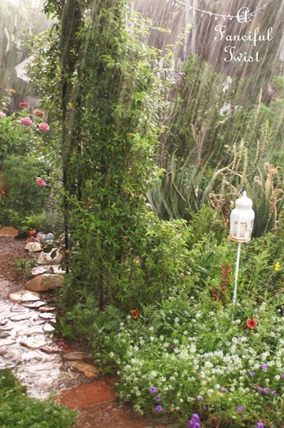Garden rain 25