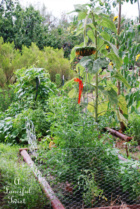 Garden rain 10