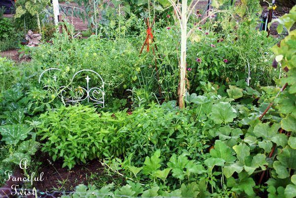 Garden rain 11