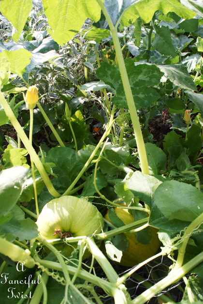 Garden grow 8
