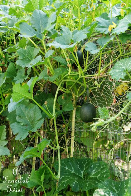 Garden grow 40