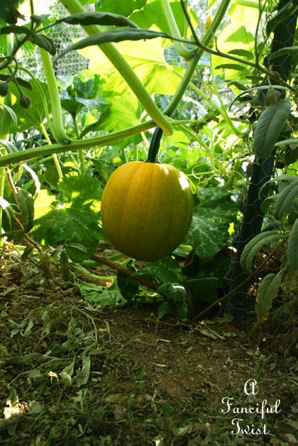Garden grow 14