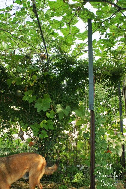 Garden grow 12