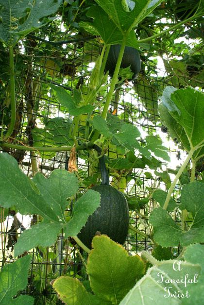 Garden grow 13