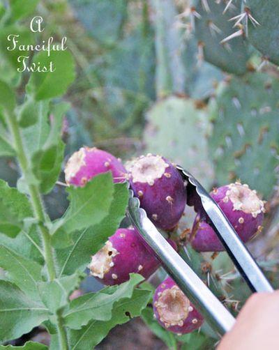 Harvesting girl 8