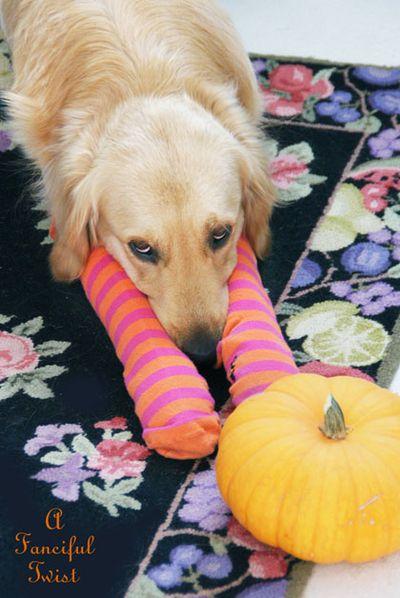 Halloween Dog 6