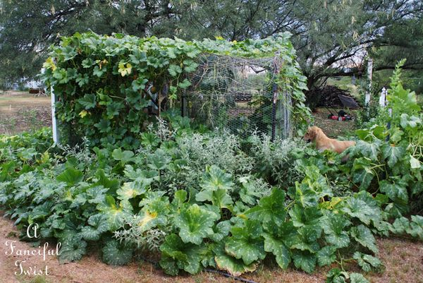 Garden change 15