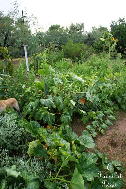 Garden change 10