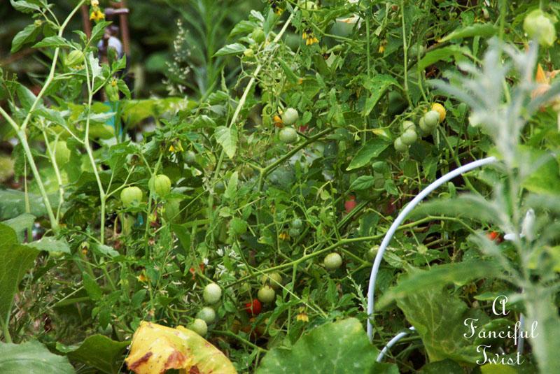 Garden change 6