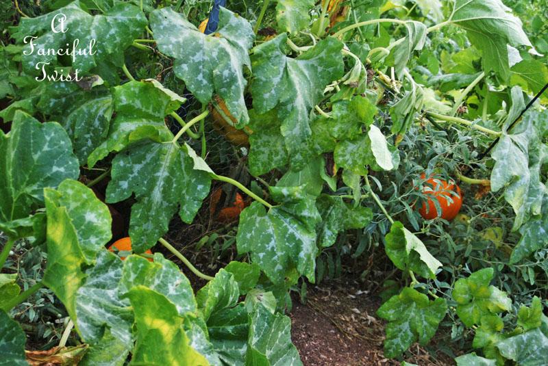 Garden change 11