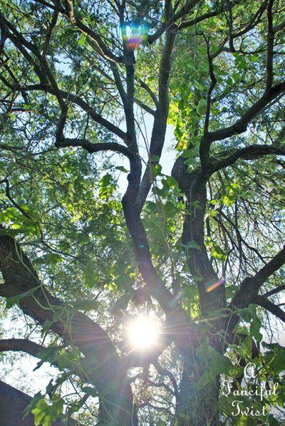 Wishing tree 13