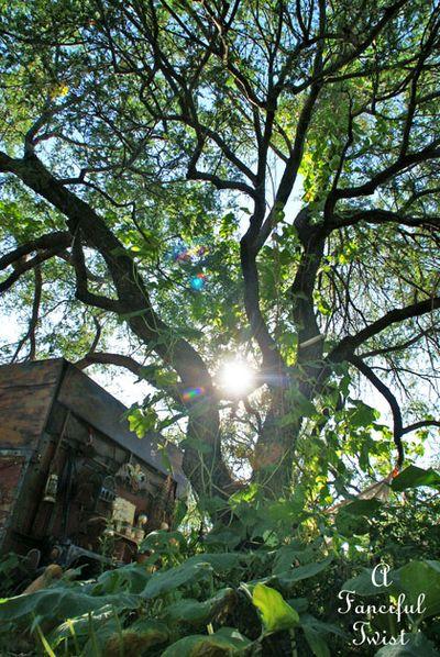 Wishing tree 14