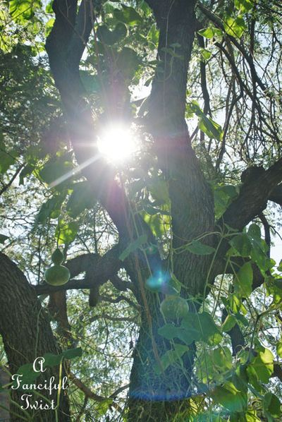 Wishing tree 11