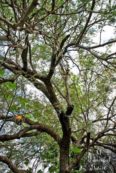 Wishing tree 17