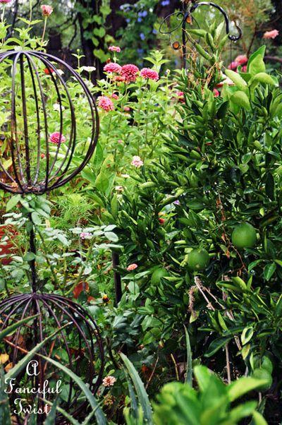 September garden 29