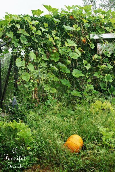 September garden 15