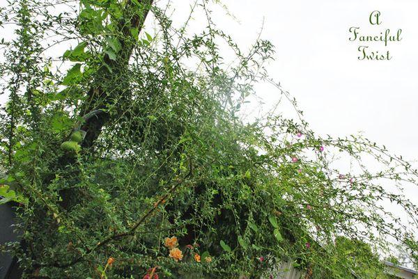 September garden 35