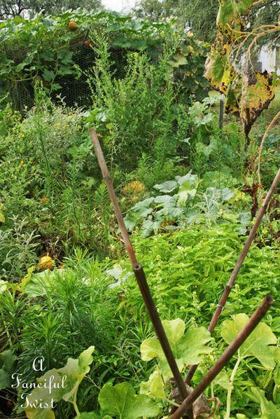 September garden 10