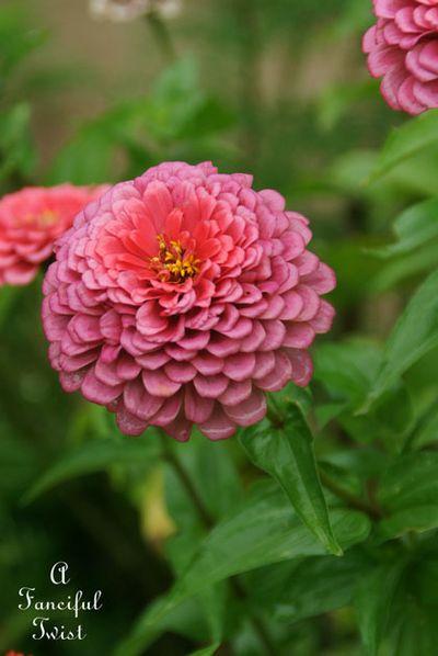 September garden 28