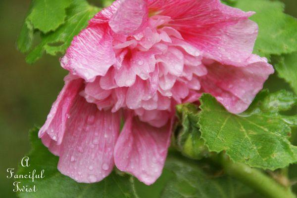 September garden 31