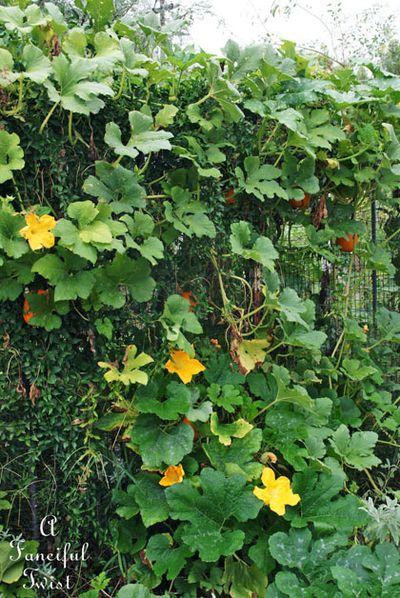 September garden 16