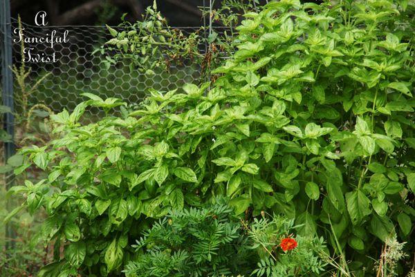 September garden 9