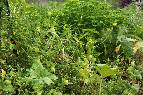 September garden 6