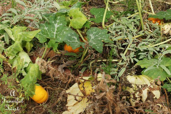 September garden 36