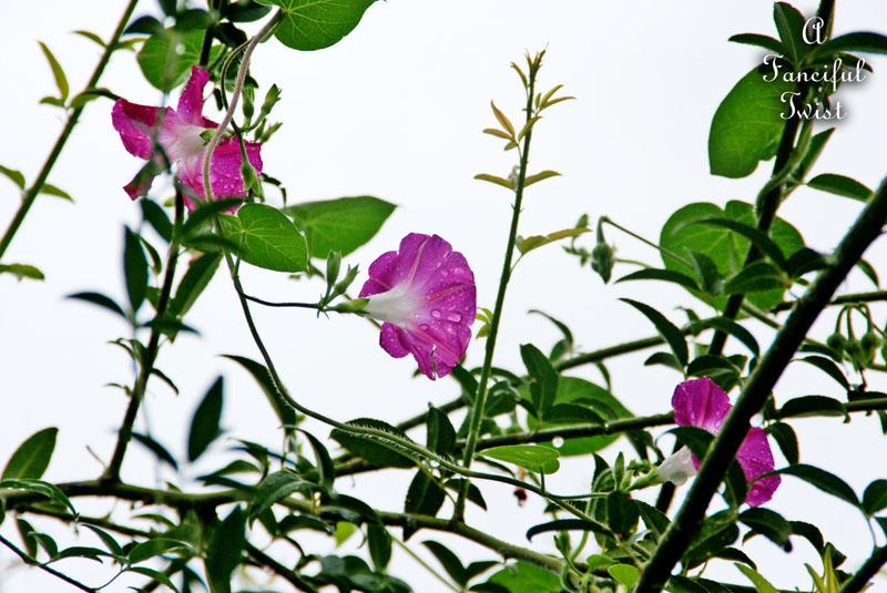 September garden 40