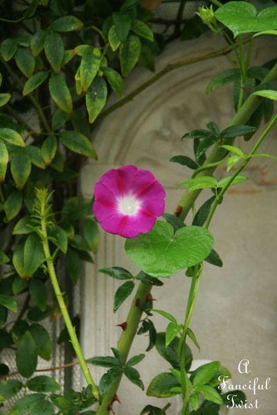 September garden 43