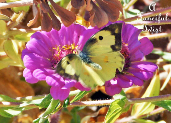 Butterflies flutter around 2