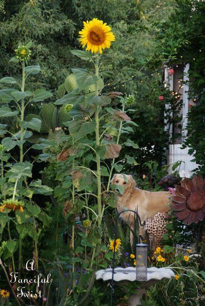 Summer garden 23